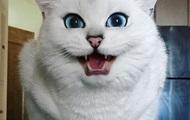 Кот с  мультяшными  глазами покоряет Сеть