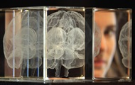 Scientists have found the difference between male and female brain