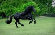 Найден  самый красивый в мире  конь