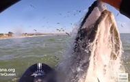 У Каліфорнії серфінгистка зіткнулася з китом