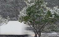 Непогода в Крыму: ветер валит деревья