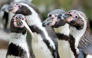 In a canadian zoo are investigating the death of seven penguins