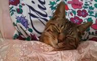 Новим трендом мережі стали сплячі коти