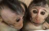 In Russia, the monkeys are ready to fly to Mars