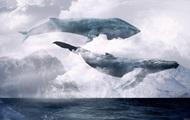 Групи смерті в Україні. Як кити вбивають дітей