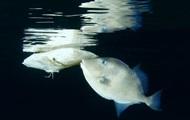 Ученые: микропластик в океане стал частью пищевой цепи