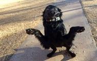 Выпучивший Augen der Hund hat die Aufgabe memes