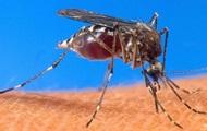 В трех странах мира проведут первые испытания вакцины от малярии