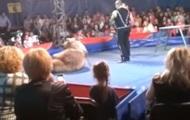 В Белой Церкви медведь напал на зрителей цирка