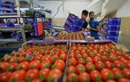 Туреччина наростила експорт помідорів на 54%