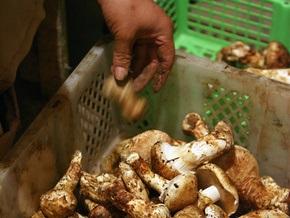 В Херсонский области в результате отравления грибами умерла женщина
