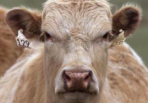 В Бразилии бык ворвался в магазин
