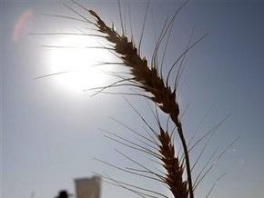 Египет забраковал партию украинской пшеницы