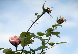 В Киеве выбрали победителей 56-й выставки цветов