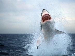 Кризис: Акулы стали реже атаковать людей