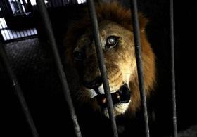 Экологи: В Северодонецке в брошенном зоопарке умирают животные