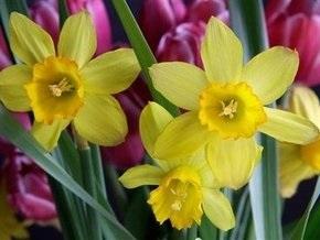 Погода: весна вступает в свои права