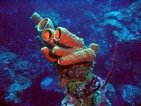 Обнаружены следы самых древних живых существ - губок