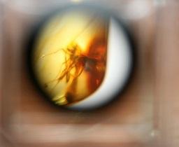 Выставка  Доисторические насекомые в янтаре  в Тольятти