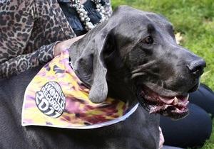 Самый большой пес - В США умер один из самых больших псов в мире