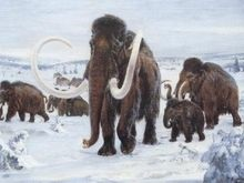 Ученые выяснили, откуда родом шерстистые мамонты