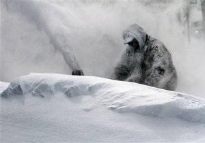Новости США - непогода в США: Число жертв снежного шторма Немо достигло восьми человек