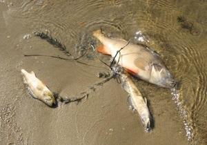 На Киевском море разлагаются тонны мертвой рыбы