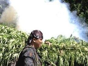 В Полтавской области милиция сожгла более 100 кг наркотиков