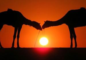 В Канаде похитили машину с тигром и двумя верблюдами