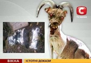 СТБ: Чупакабру обнаружили в Тернопольской области