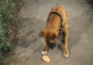 Собаки съели разбросанные кусочки колбасы, в которых было ядовитое вещество