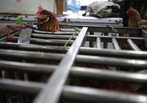 Птичий грипп: ВОЗ: в Китае от птичьего гриппа умерли пять человек