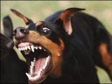 В Керчи собака покусала ребенка