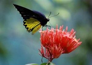 Сегодня в Киевском зоопарке проходит День бабочки