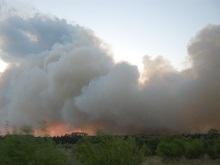 В Луганской области сгорела тысяча гектаров лесов и полей
