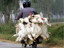 В хозяйстве, где был выявлен птичий грипп, завершена утилизация кур