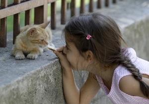 Разработан ряд документов, регулирующих вопрос о содержании бездомных животных