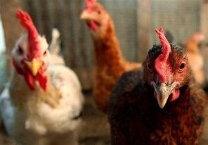 Недалеко от границы Украины зафиксирована вспышка птичьего гриппа