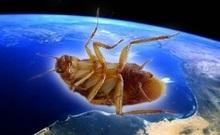 Космические тараканы выносливее своих земных собратьев