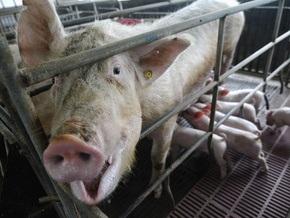 В ирландской свинине обнаружили диоксин