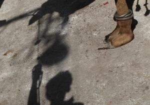 В Киевском зоопарке умер верблюд