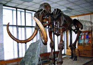 В России построят музей в виде черепа мамонта