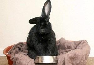 В Британии домашний кролик возомнил себя собакой