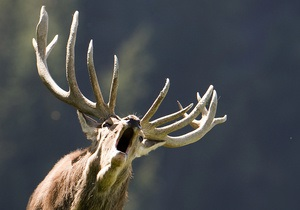 В штате Нью-Йорк олень забежал в закусочную