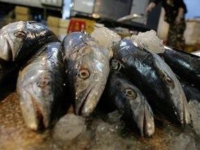 Под Киевом открыли самый крупный в Украине холодильный комплекс для морепродуктов