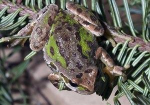 Биологи установили, что лягушки  во время прыжка используют катапульту
