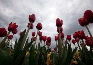 В Сумах около Мемориала Славы неизвестные выкосили тюльпаны
