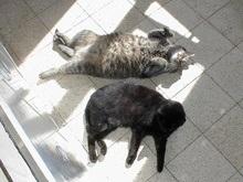 Погода на пятницу: в Киеве 37 градусов тепла
