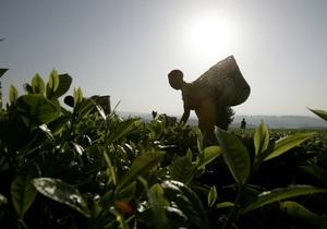 Чай подорожает в 2012 году на 12% из-за плохих погодных условий