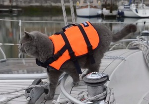 Новости Великобритании - новости о животных: Путешествующий по морю кот сбежал с яхты хазяев